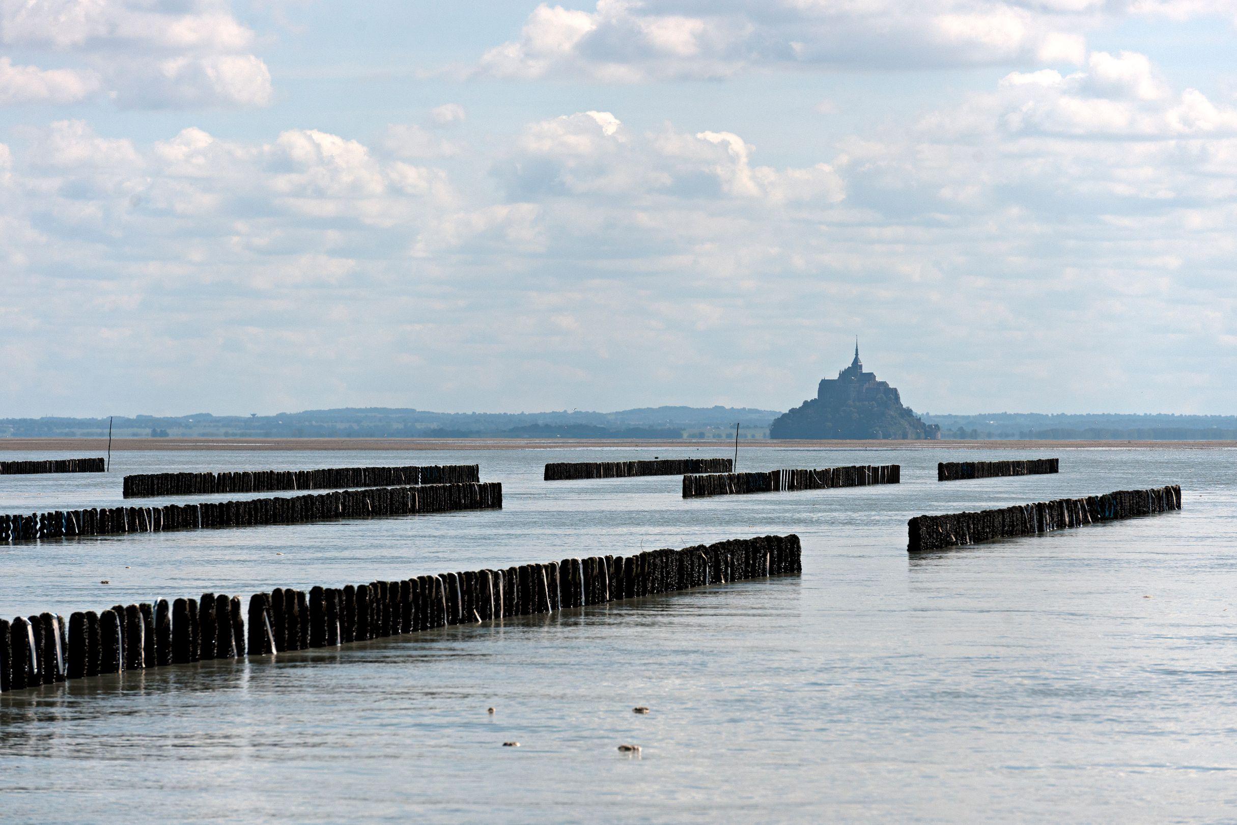 Moules de bouchot de la Baie du Mont-Saint-Michel