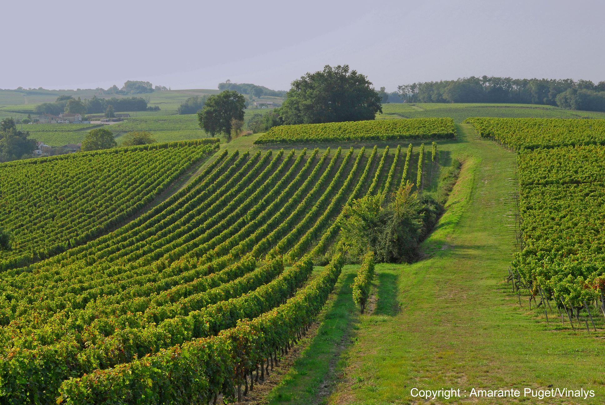Côtes de Bourg - Bourg - Bourg...