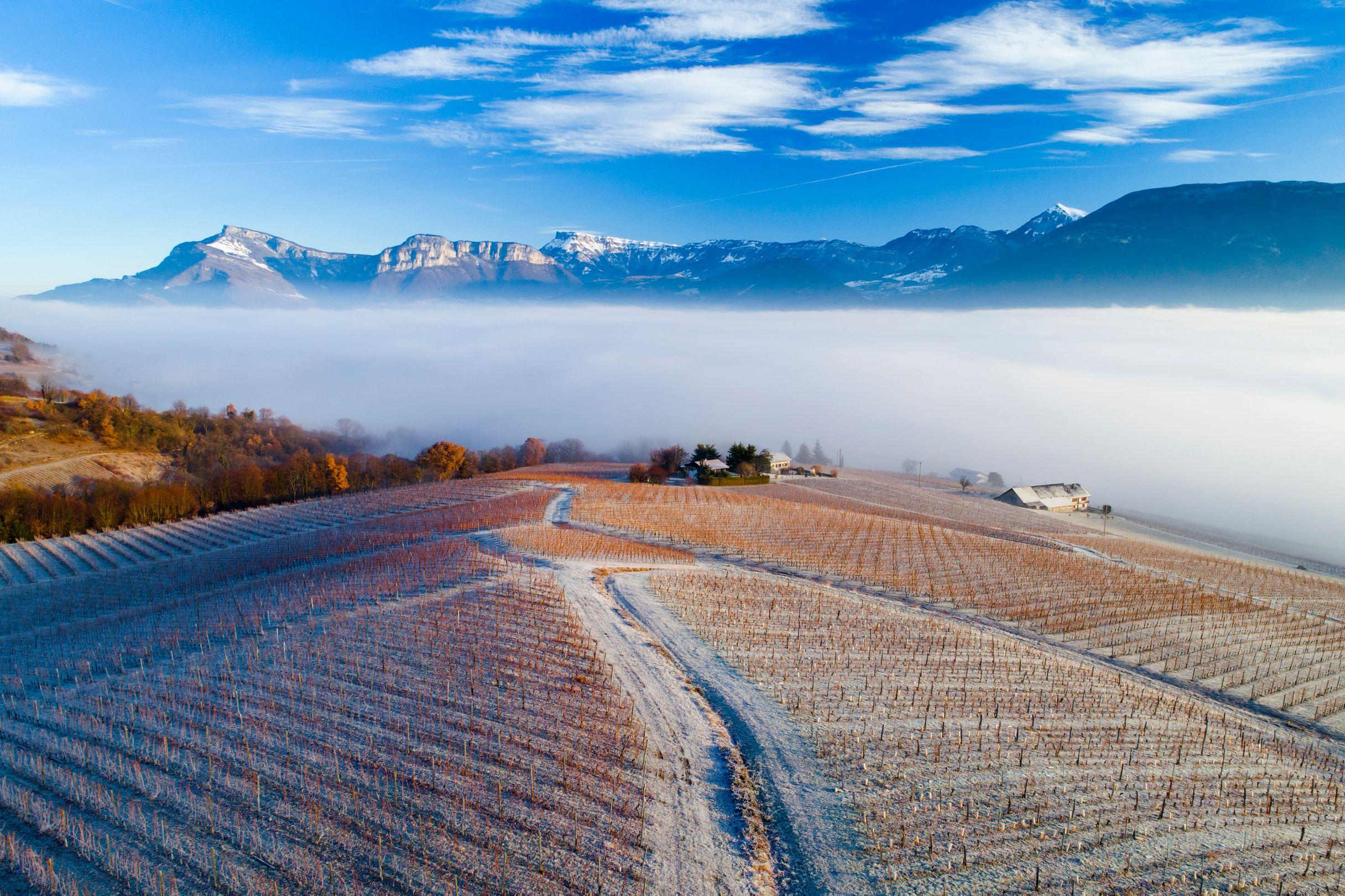 Savoie ou Vin de Savoie