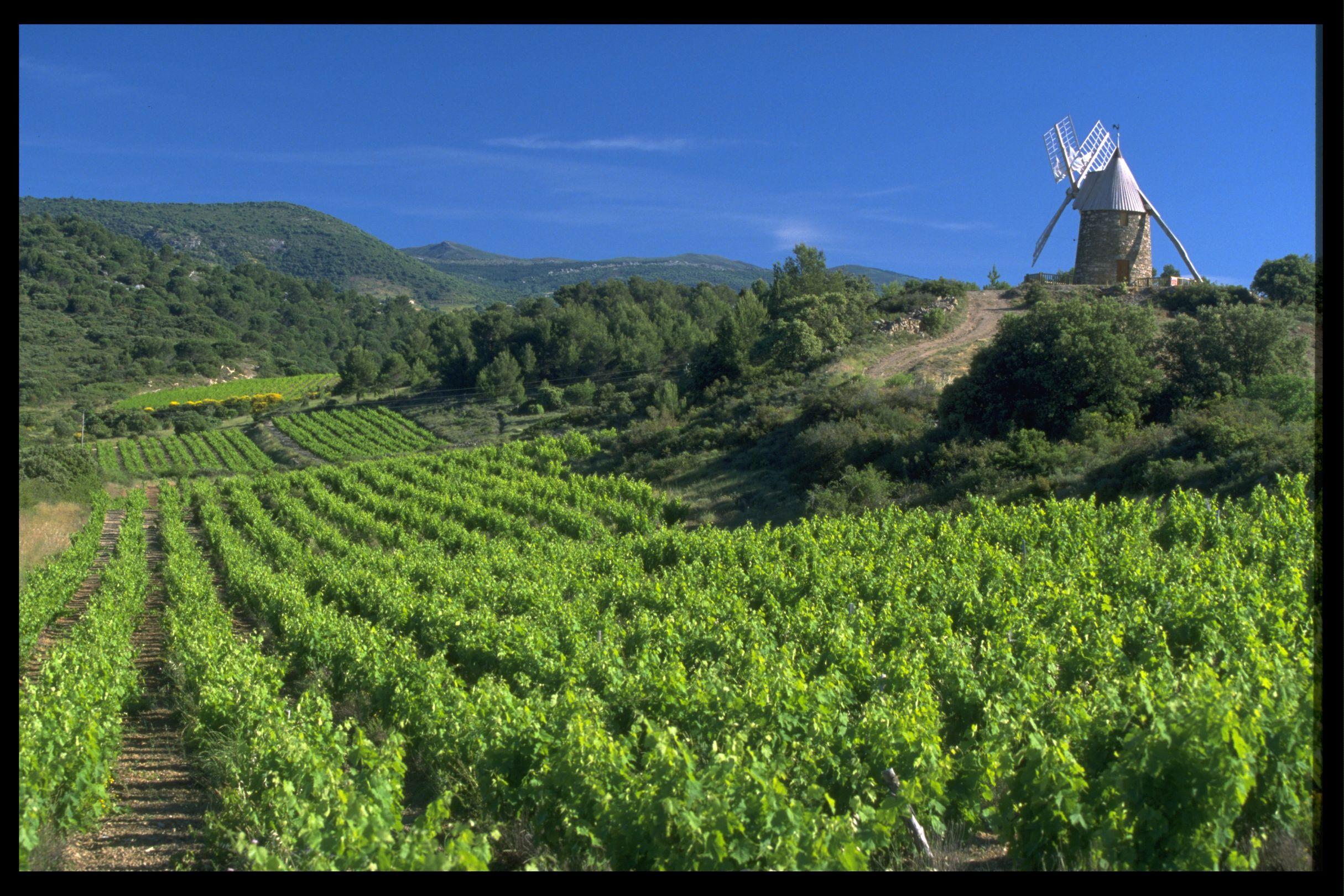 Clairette du Languedoc
