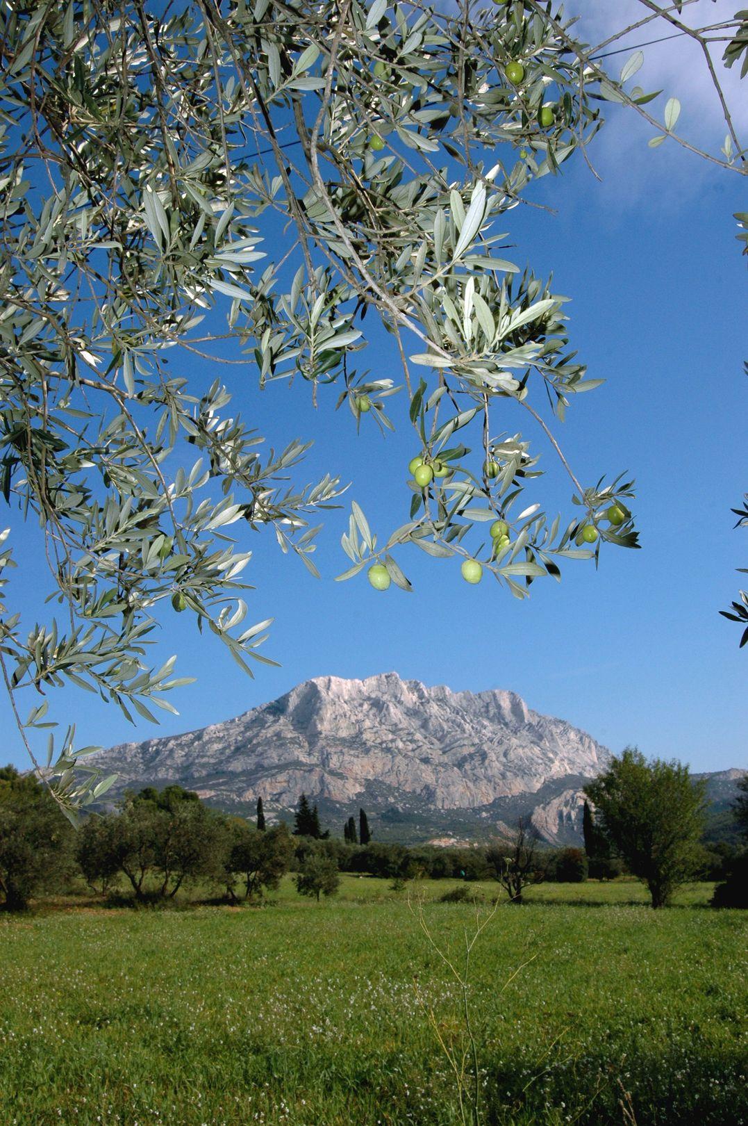 Huile d'olive d'Aix en Provenc...